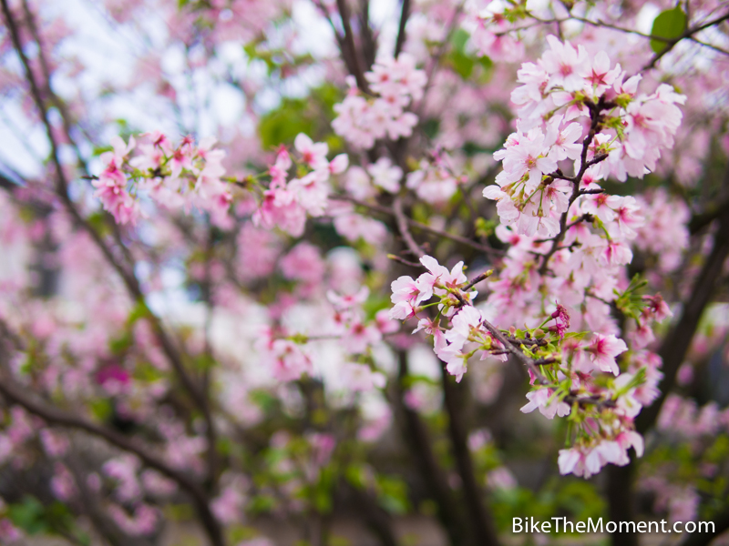 OLYMPUS DIGITAL CAMERA  【外地遊記】台北。同踏初春之美 130325 132216