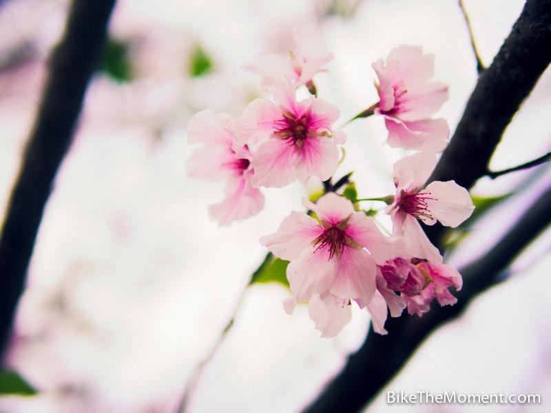 OLYMPUS DIGITAL CAMERA  【外地遊記】台北。同踏初春之美 130325 132450
