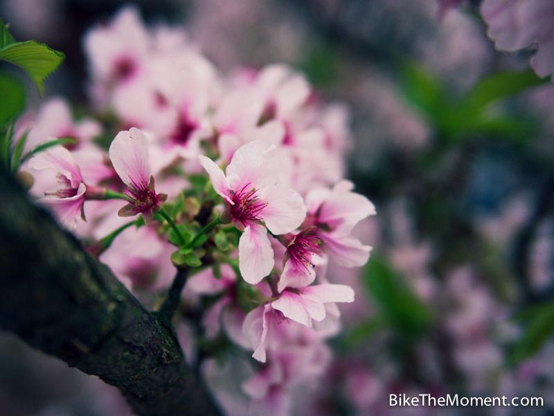 OLYMPUS DIGITAL CAMERA  【外地遊記】台北。同踏初春之美 130325 134222