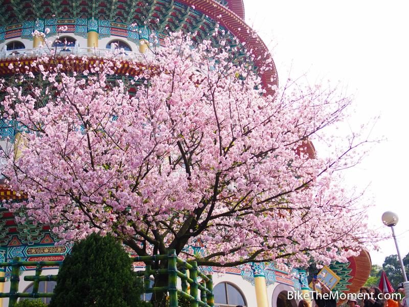 OLYMPUS DIGITAL CAMERA  【外地遊記】台北。同踏初春之美 130325 141243