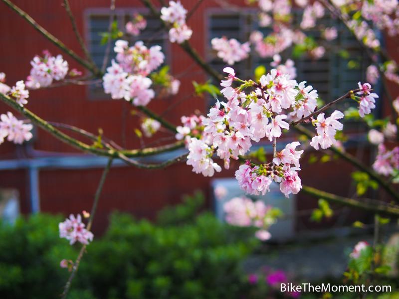 OLYMPUS DIGITAL CAMERA  【外地遊記】台北。同踏初春之美 130325 141423