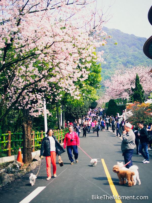 OLYMPUS DIGITAL CAMERA  【外地遊記】台北。同踏初春之美 130325 141534