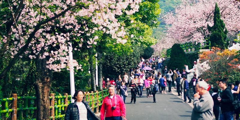 【外地遊記】<br>台北。同踏初春之美  【外地遊記】台北。同踏初春之美 130325 1415342
