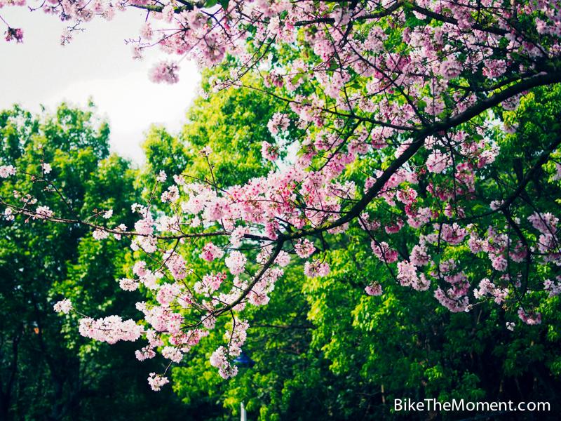 OLYMPUS DIGITAL CAMERA  【外地遊記】台北。同踏初春之美 130325 142027