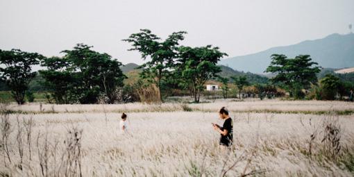 踩單車就是可以找到這樣的仙境﹣白茅草失樂園